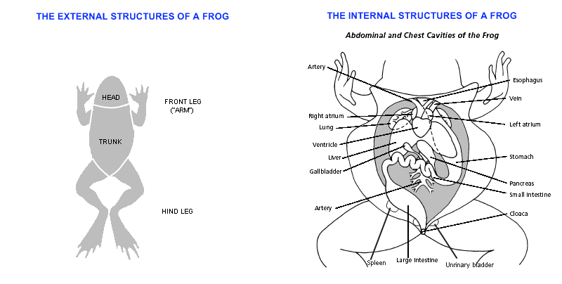 Frog Science Activities