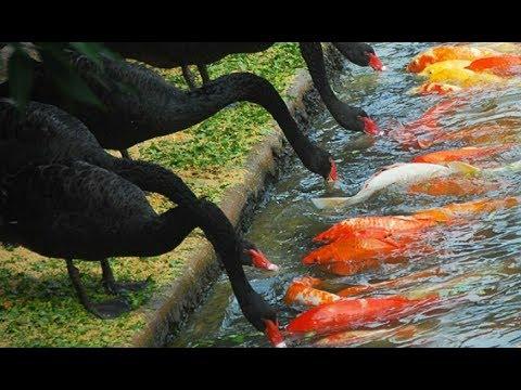 Fishing Techniques Methods Review 2018